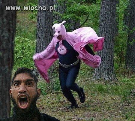 Super świnia atakuje
