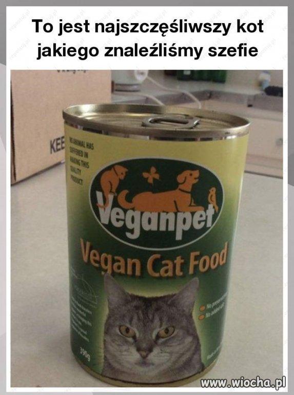 Wegańska karma dla kotów