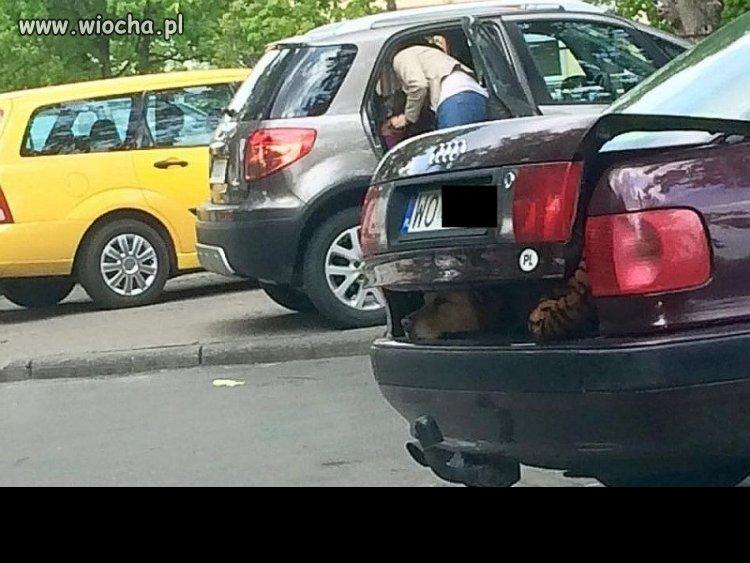 No zeby psa w bagażniku trzymać?