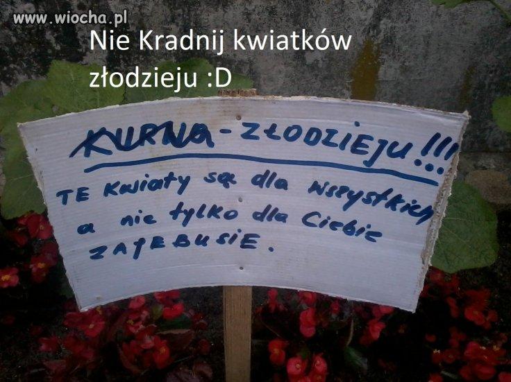Hahahahah Polacy