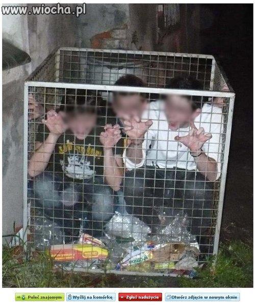 Śmietnikowe skrzaty