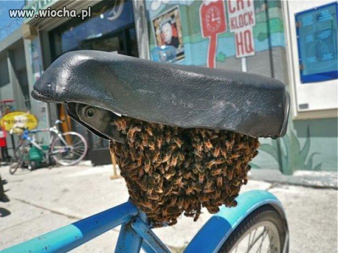 Rower pszczelarza?