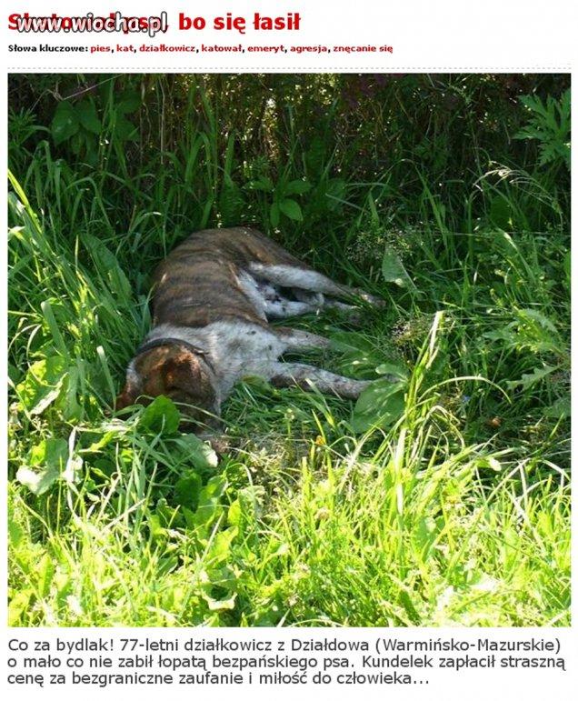 77-latek skatował psa łopatą bo się łasił...
