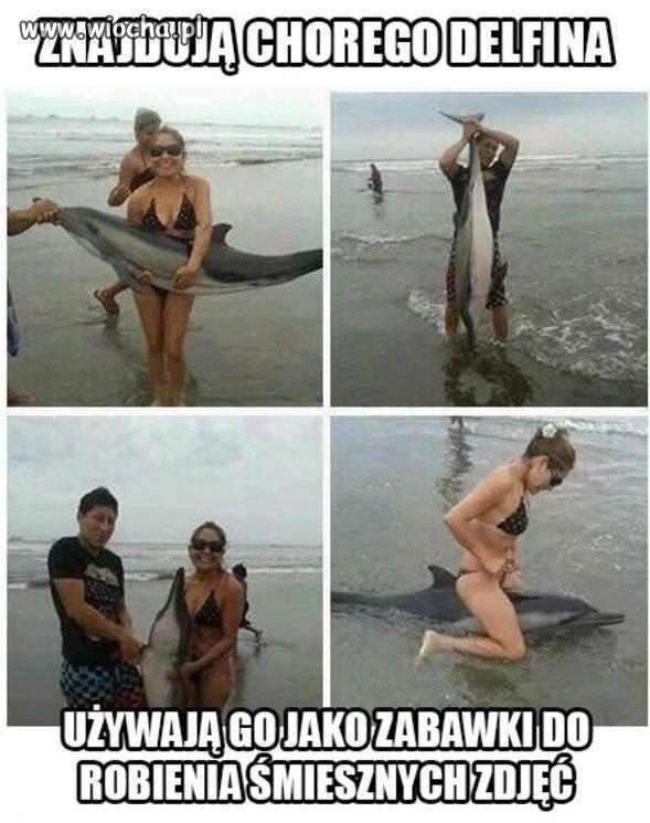 Znajdują Chorego delfina.