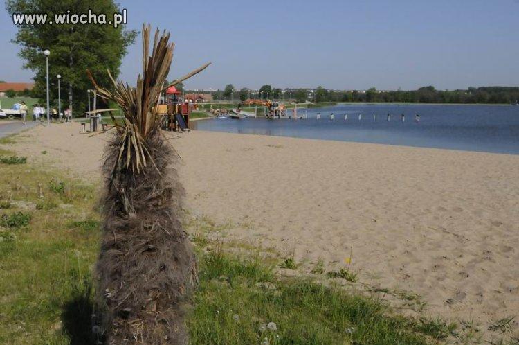 Palmy w Kraśniku nie odbiły