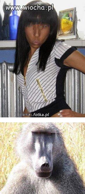 Darwin miał rację