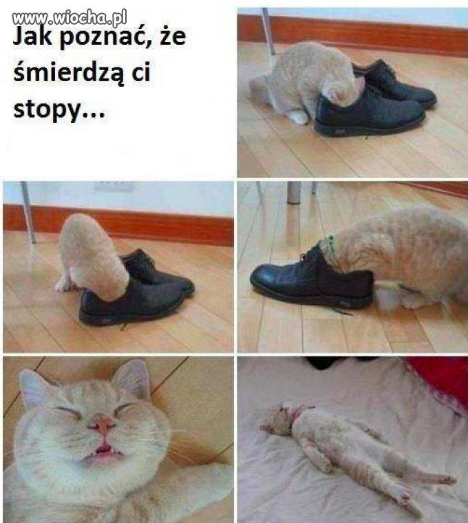 Kup sobie kotka to się dowiesz