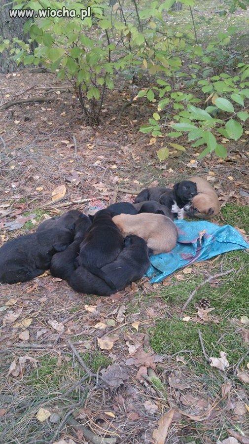 11 szczeniąt wyrzuconych do lasu !!!