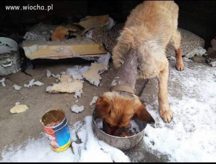 Do właściciela - obyś wyłysiał jak ten biedny pies.