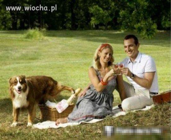 Niema to jak udany piknik.