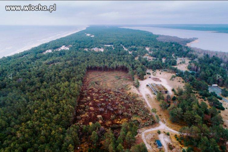 Wycięte drzewa w Łebie