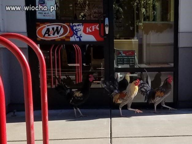 Protest przed restauracją KFC