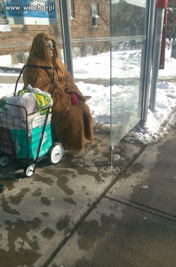 Wookie na przystanku.