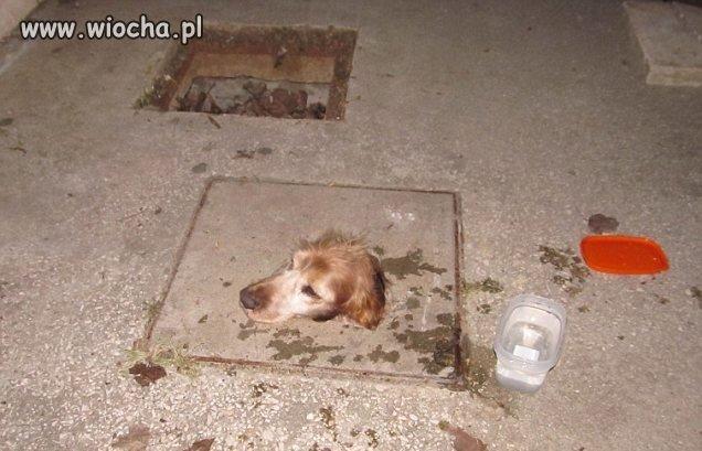 Zamurowali psa, wystawała tylko głowa