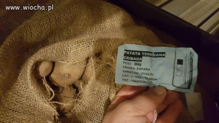 Ziemniak Hiszpański a sprzedawany jako polski