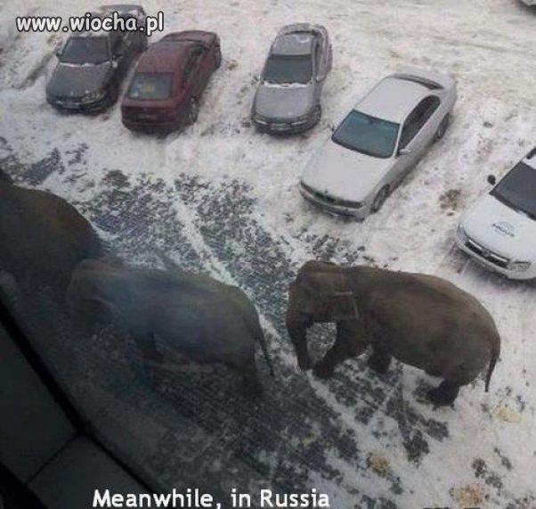 Słonie na osiedlu