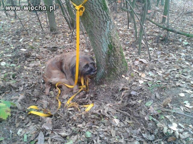 Ktoś zostawił w lesie psa