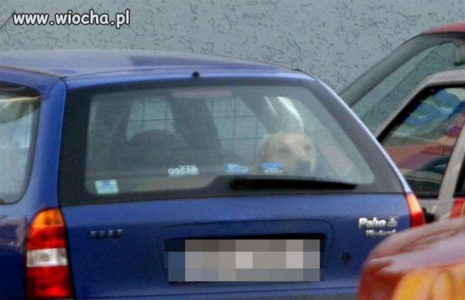 Pies zamknięty w rozgrzanym samochodzie na parkingu