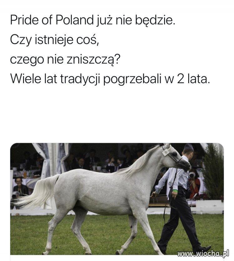 Poszły konie po betonie