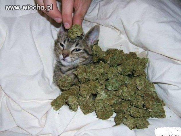 Kot w Ziołach
