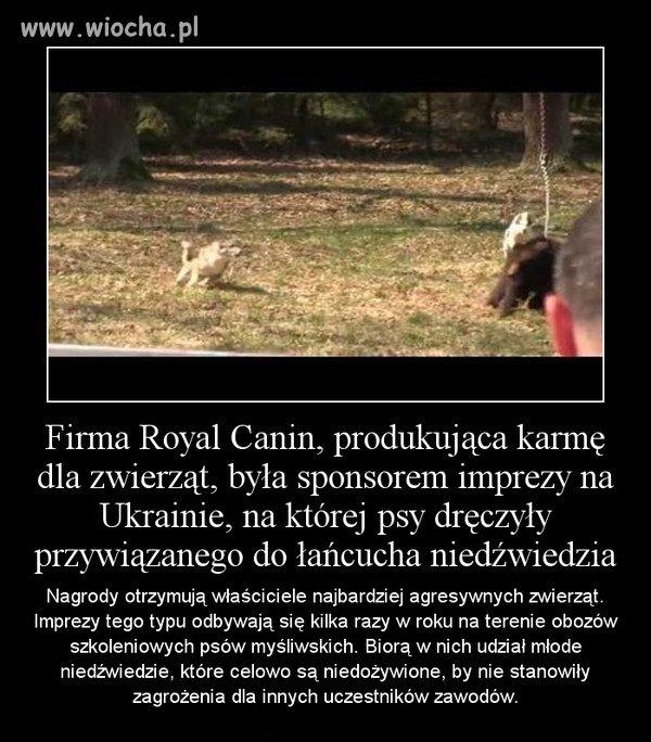 Masakryczna zabawa sponsorowana przez Royal Canin