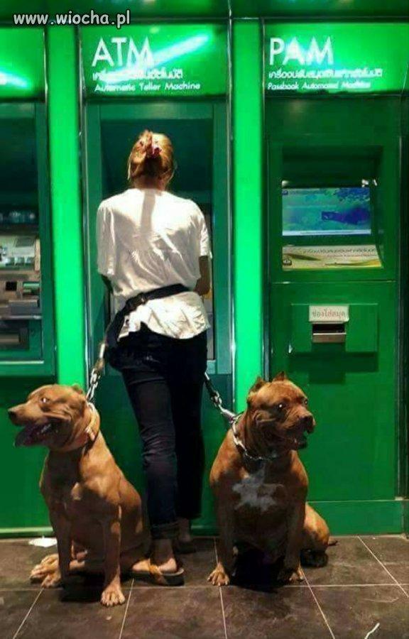 Pieski czekają na zabłąkanego imigranta.