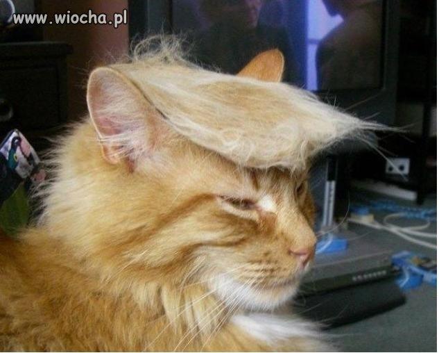 Oddaj głos na Trumpkota