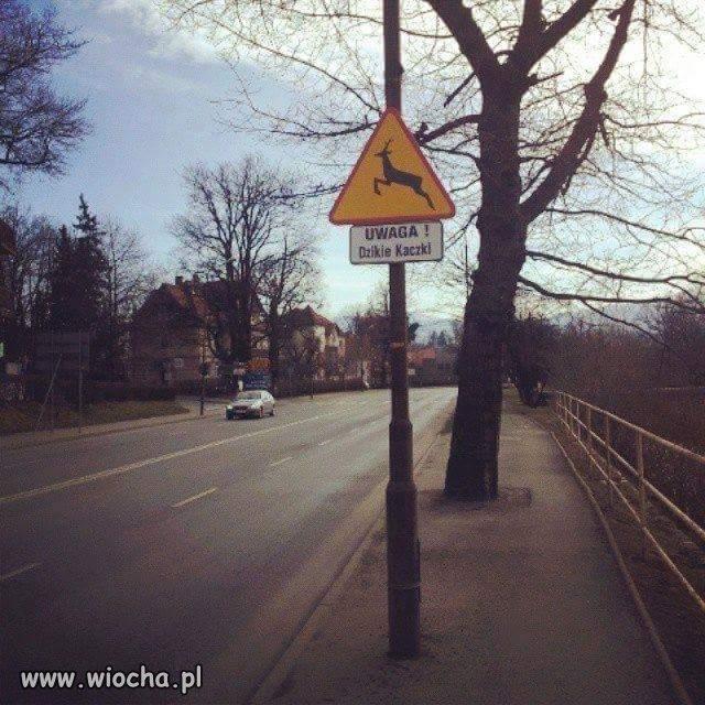 Znak z kaczką - zakazany.