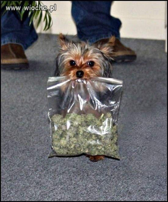 Psi Diler...