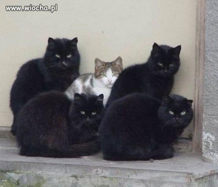Kot prezesa też ma ochronę.