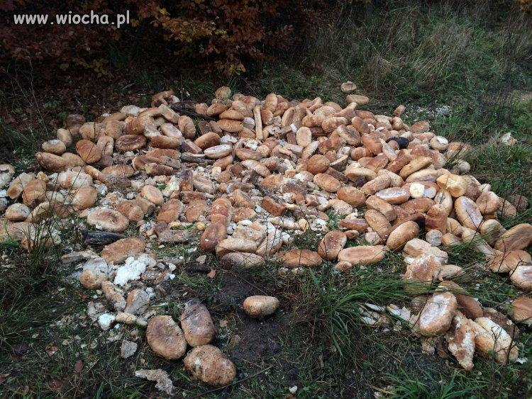 Stos chlebowy Gdyni - Chylonia, Las