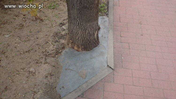 Drzewo w Wałczu