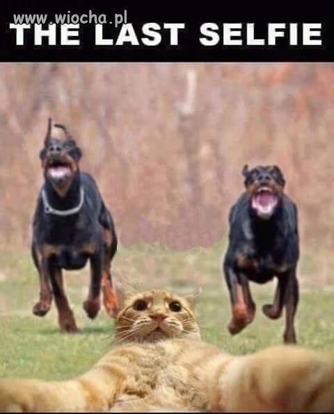 Gdyby koty mia�y smartfona