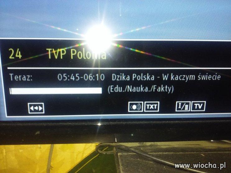 Dzisiaj w TV POLONIA