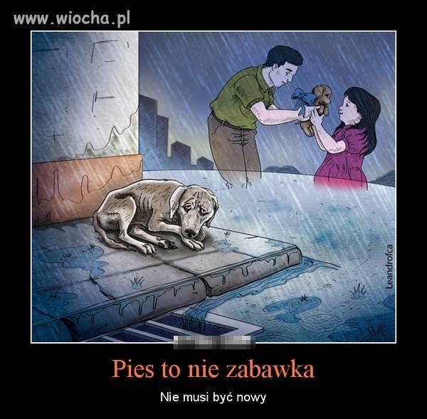 Pies to nie zabawka tak jak i inne zwierzęta