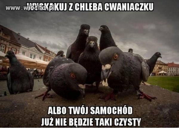 Krakowska Gangsta