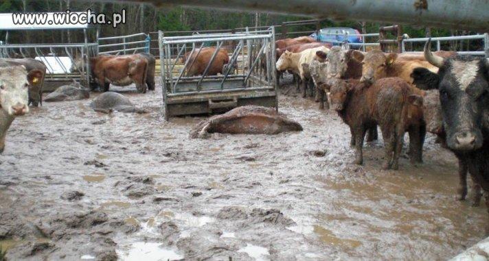 Najprawdopodobniej jakieś gospodarstwo rolne