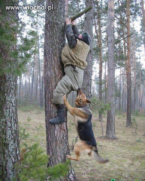 Wisisz na drzewie? Pies Cię gryzie w dupę?