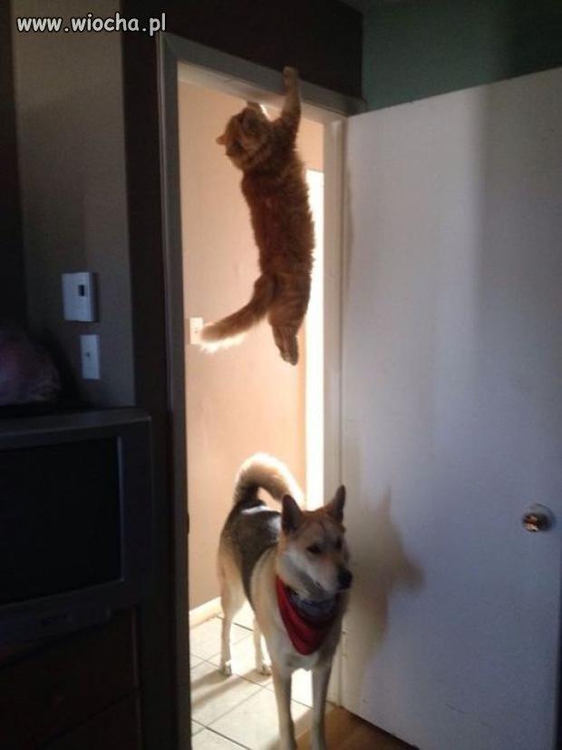 Chyba widziałem kotecka