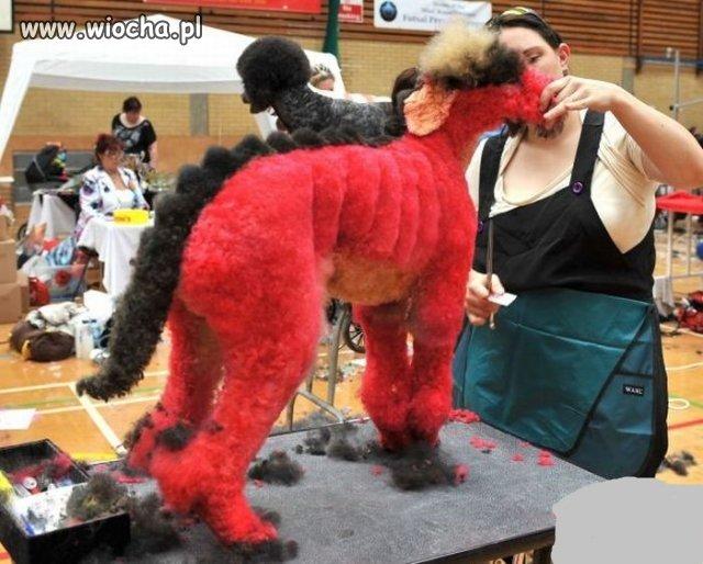 Wystawa psów?