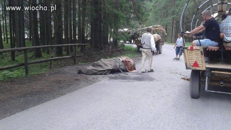 W drodze na Morskie Oko ZNOWU padł koń ...