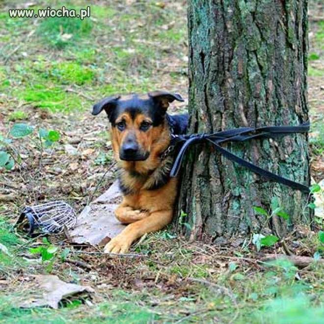 Pies przywiązany do drzewa. Świnoujście