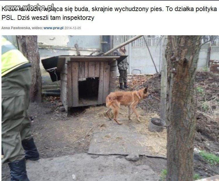 Działka Piotra Zimnickiego, prezesa PSL w Wałbrzychu.