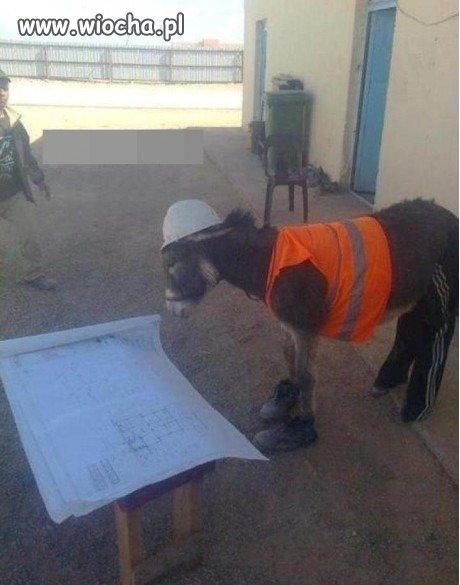 Muzułmanski inspektor budowlany