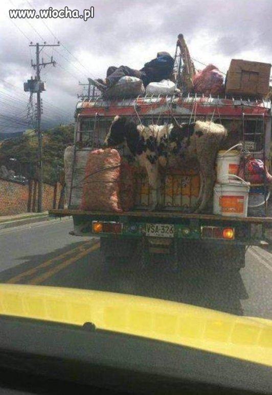 Humanitarny przewóz zwierząt..