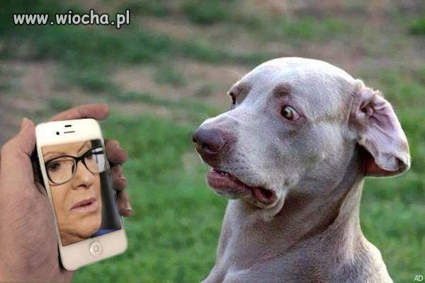 Już nawet pies się obciął ...