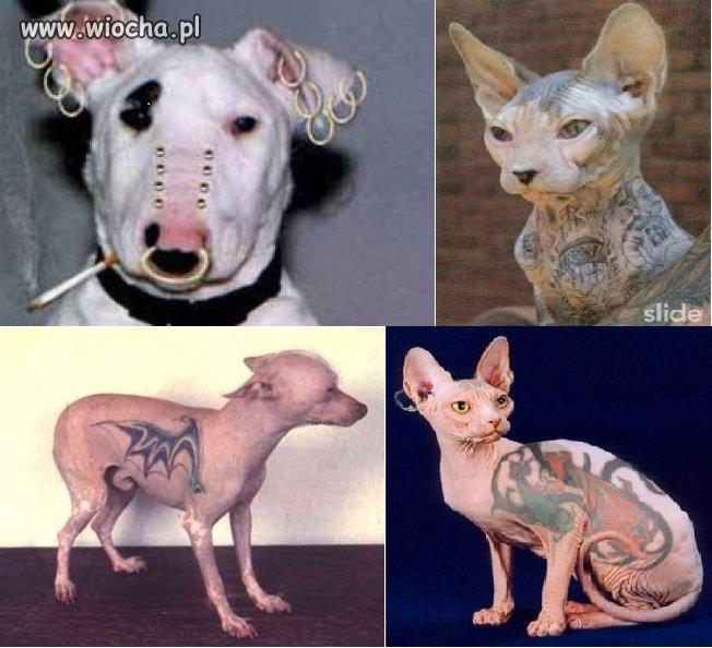 Tatuowanie i kolczykowanie zwierzaków