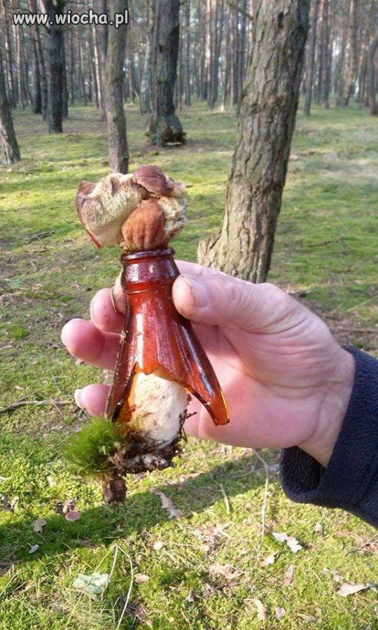 Grzybek nabity w butelkę