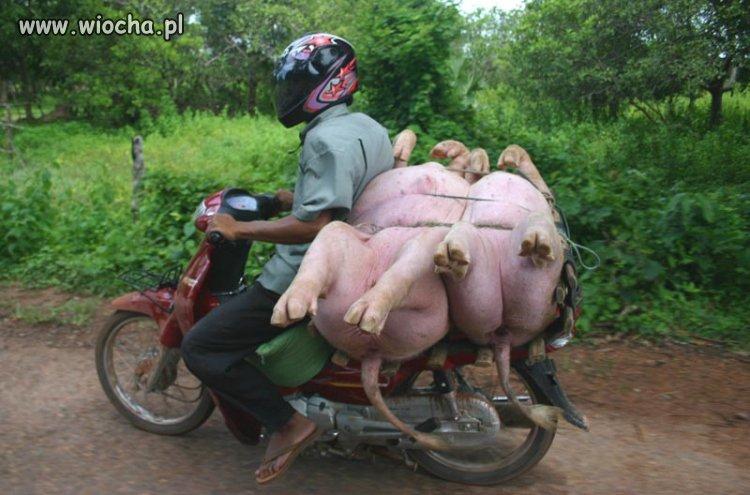 Domowe Świniobicie
