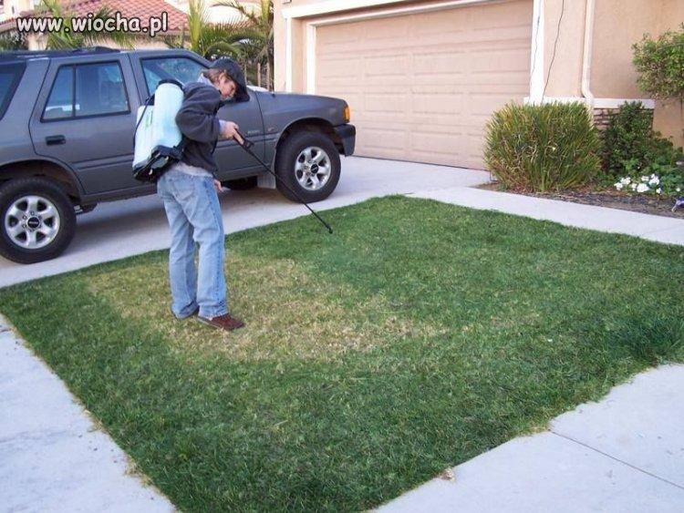 Sposób na zieloną trawę